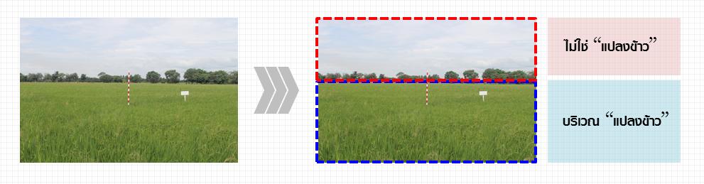 """รูปที่ 1 รูปภาพที่บันทึกได้จาก Field Server ประกอบด้วย บริเวณ """"แปลงข้าว"""" และ """"ไม่ใช่แปลงข้าว"""""""