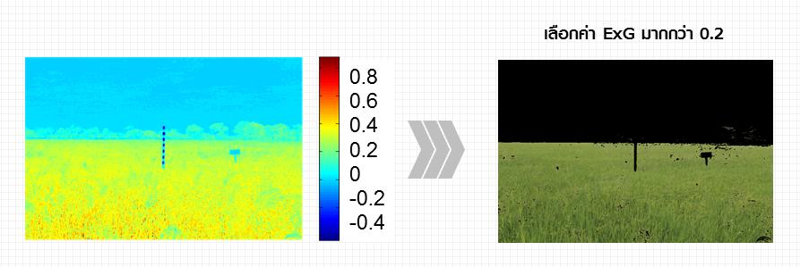รูปที่ 2 รูปภาพ Field Server ถูกคำนวณและแทนด้วยค่า ExG สำหรับแต่ละจุดภาพ (ซ้าย)