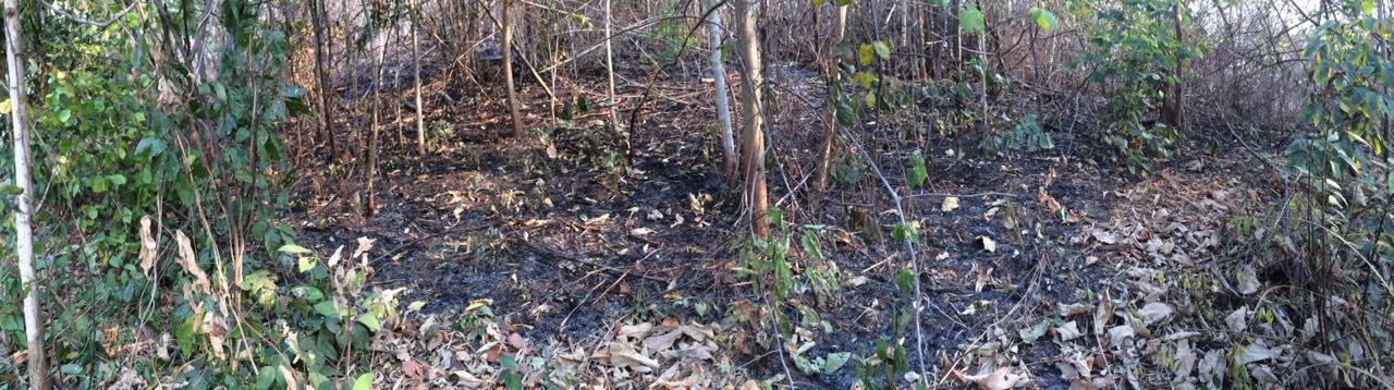 ภาพป่าที่ถูกเผาไปเรียบร้อย บริเวณ อ.บ้านไร่ จ.อุทัยธานี ถ่ายเมื่อวันที่ 13 ก.พ. 2559